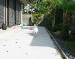犬の足形の模様入り♪土間コンクリート敷き 神戸市